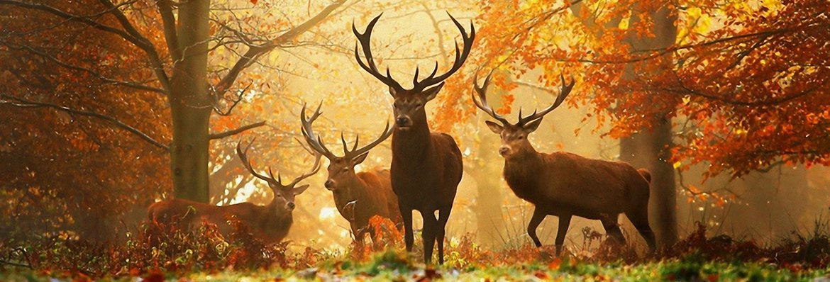 Wisconsin best top bucks, deer, venison, jerky, turkey, sausage, popcorn seasonings